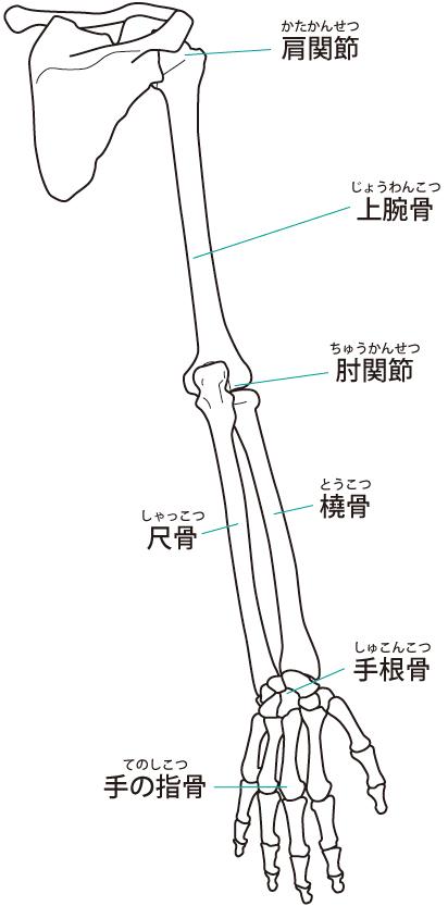 上腕二頭筋長頭腱炎への当院のアプローチは?